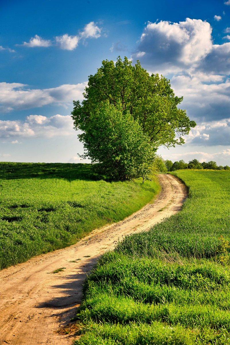 Fresh Friday: Your freshly edited photo early every Friday. #Luban #Poland #GreenHills #Tree #Trees #Trail #Path #Farmland #TallGrass #GrassyField #Green #FreshFriday https://t.co/D6h37AJWRf