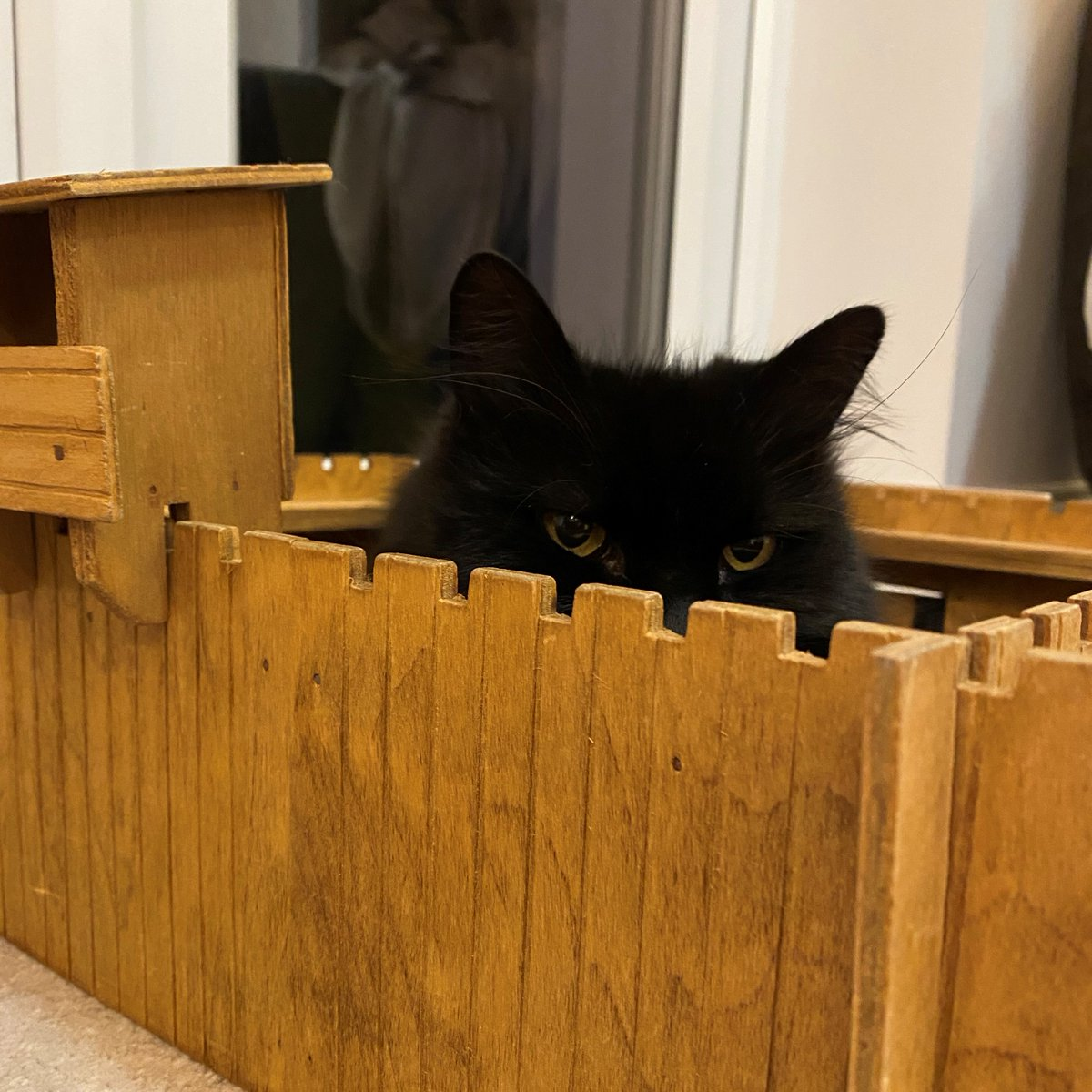 Teddy is defending his fort! Have a valiant #caturday. 😎 https://t.co/xXrHEpbG5z