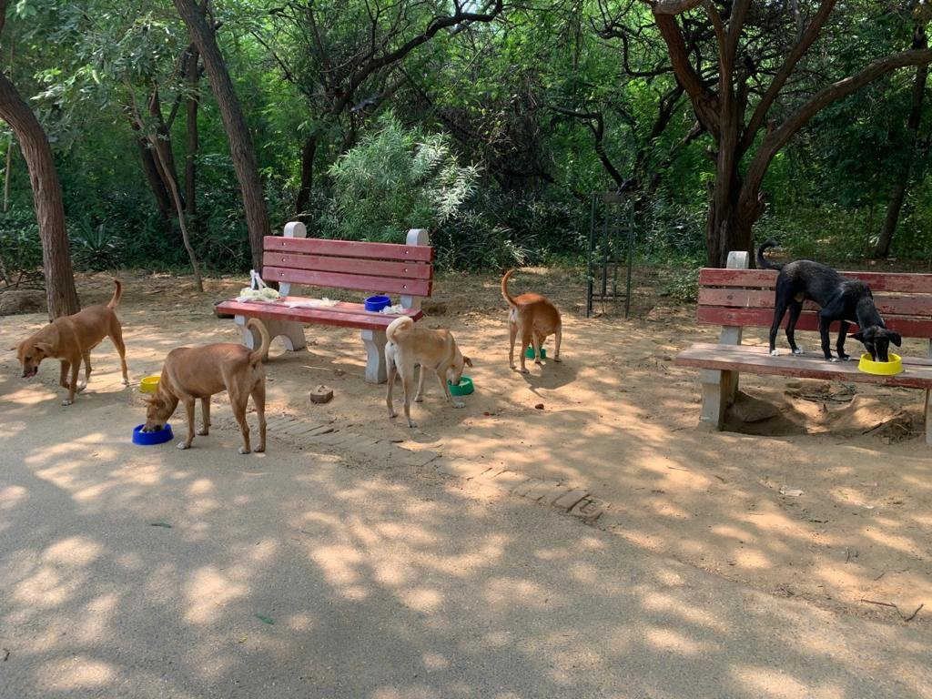 Our Day 177 of #feedingstrays in #delhi Hope you are looking after stray animals and birds around you. Please do. #animalsarepeopletoo #bekind #onekindact #lockdownindia #unlock03 https://t.co/gnCneaMyP8