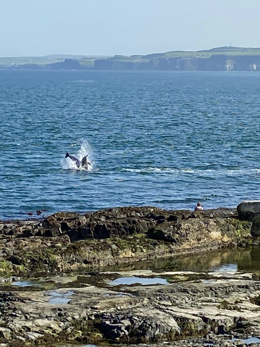 'What did you do today at school?' We watched dolphins in the water off Portrush! Now that you won't forget!🐬@KerryMillar5 @IEFNI @pstt_whyhow @daera_ni @ILoveNorthCoast @OutdoorClassDay #outdoorlearning https://t.co/fKYbh9IyPT