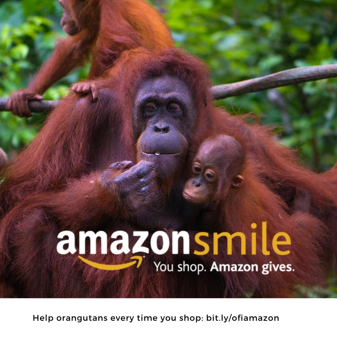 By choosing Orangutan Foundation International as your charity, Amazon donates 0.5% of the purchase price towards our work. It's an effortless way to support OFI and help #orangutans, so head to https://t.co/JNqt0Tp0xZ and sign up today💝 https://t.co/aSHgs8YtGK