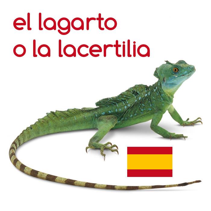 Lagarto #Español #palabras #palabra #idioma #idiomas #lengua https://t.co/Psrui4eW2U