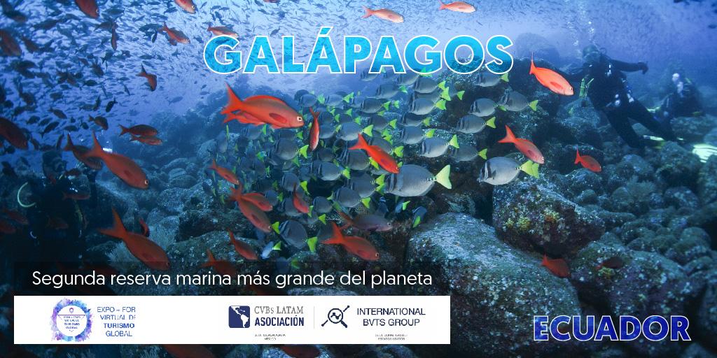 Galápagos es un destino único en el mundo. Un paraíso perdido en el tiempo, rodeado de mágicos paisajes, un agradable clima y gente amable. Conoce más sobre las Islas Encantada en la #IndustriaDeReunionesEc: https://t.co/zQb8b00Bs5 #ExpoForoVTG https://t.co/XHbb1LMCPy