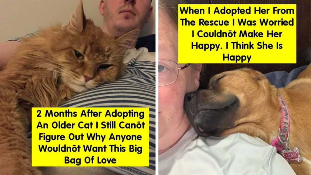 https://t.co/QSXU7nH7aJ #Cat #Whiskers #Felidae #Photocaption #Smalltomediumsizedcats #Head #Snout #Nose #Human #Adaptation https://t.co/W3wjlTnkNn