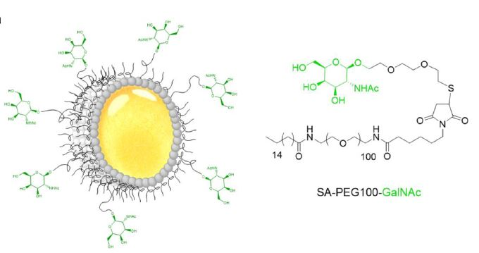 Paper #20-41 : how Nanostructured Lipid Carriers (NLC) decorated with GalNAc target hepatocyte lectin ASGPR by   @fieschif and colleagues @IBS_Grenoble @UGrenobleAlpes   and @cea_grenoble   In J. Drug Target. https://t.co/hww7znrjpQ https://t.co/gorxN2c3kE