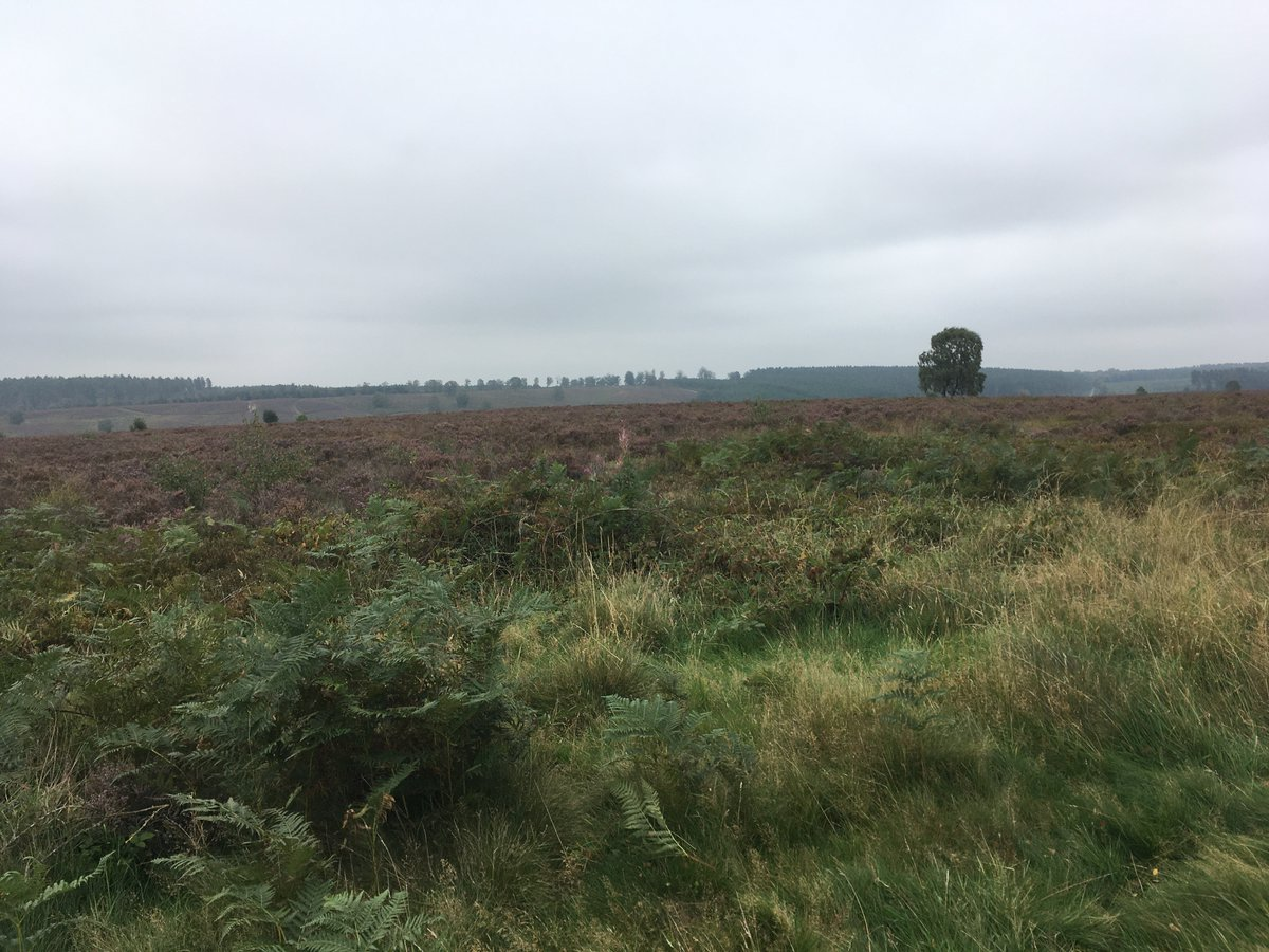 It felt as though it was #Autumnal Day on #CannockChase #Staffordshire on Wednesday with the overcast skies  #MyNationalLandscapes @cannockAONB @AONBFamily @NAAONB @StaffsCCC  @Staffordbc https://t.co/gsuOEzAjza