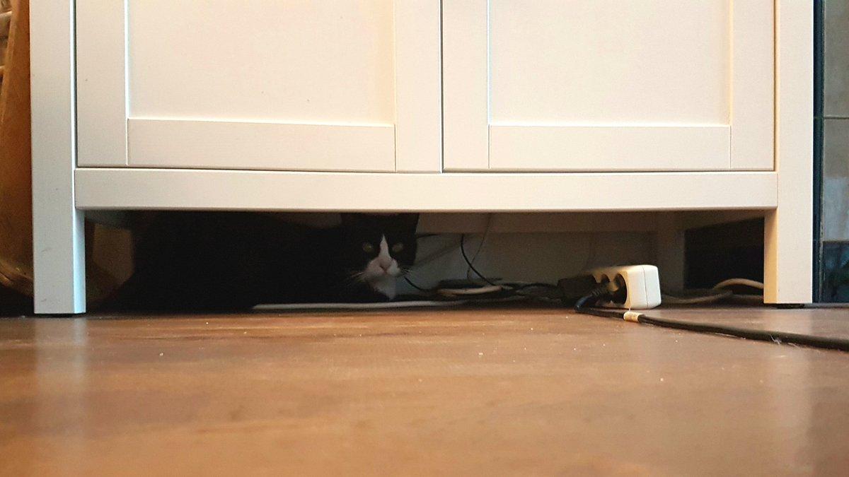 Hiding because I'm angry at my humans 😾 https://t.co/E63HuixzAW