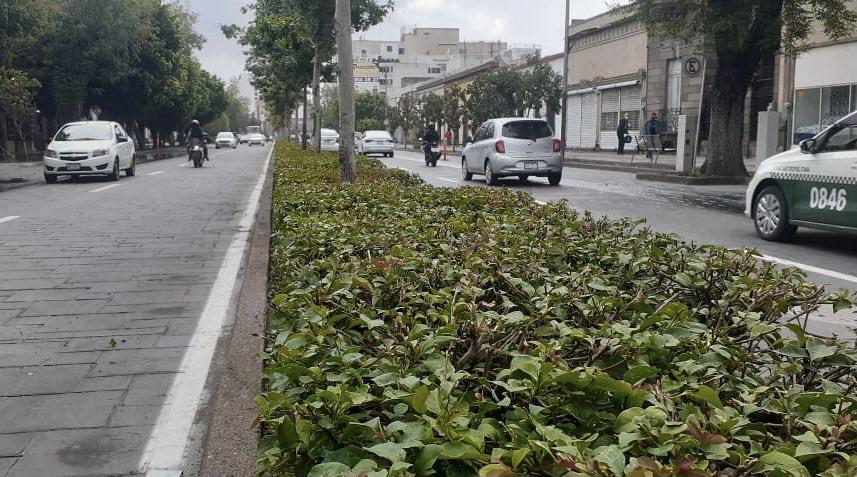 🌳| Como parte de los trabajos en diferentes puntos de la ciudad, Servicios Municipales realiza mantenimiento en Av. Carranza.  #SanLuisSuenaFuerte ✌🏼 #SLP https://t.co/oOKIDp6rzB