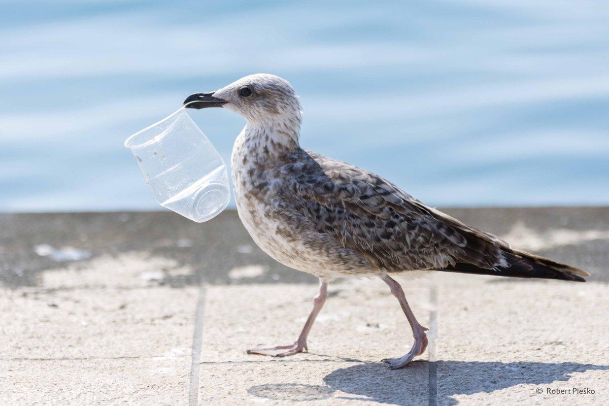 Morgen is hetWorld Cleanup Day! Wereldwijd helpt men om zwerfvuilop te ruimen en de planeet een stukje schoner te maken. Help je ook mee?♻️💪Check https://t.co/0mF8Am7Uuz voor alle info. https://t.co/H1QoAp8ye6