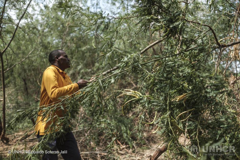 Cultivando alimentos, promovendo igualdade de gênero, desenvolvendo tecnologias verdes e cuidando do meio ambiente...  Esses e muitos refugiados estão trabalhando para atingir os objetivos sustentáveis da @ONUBrasil. https://t.co/1gbikXUi3M