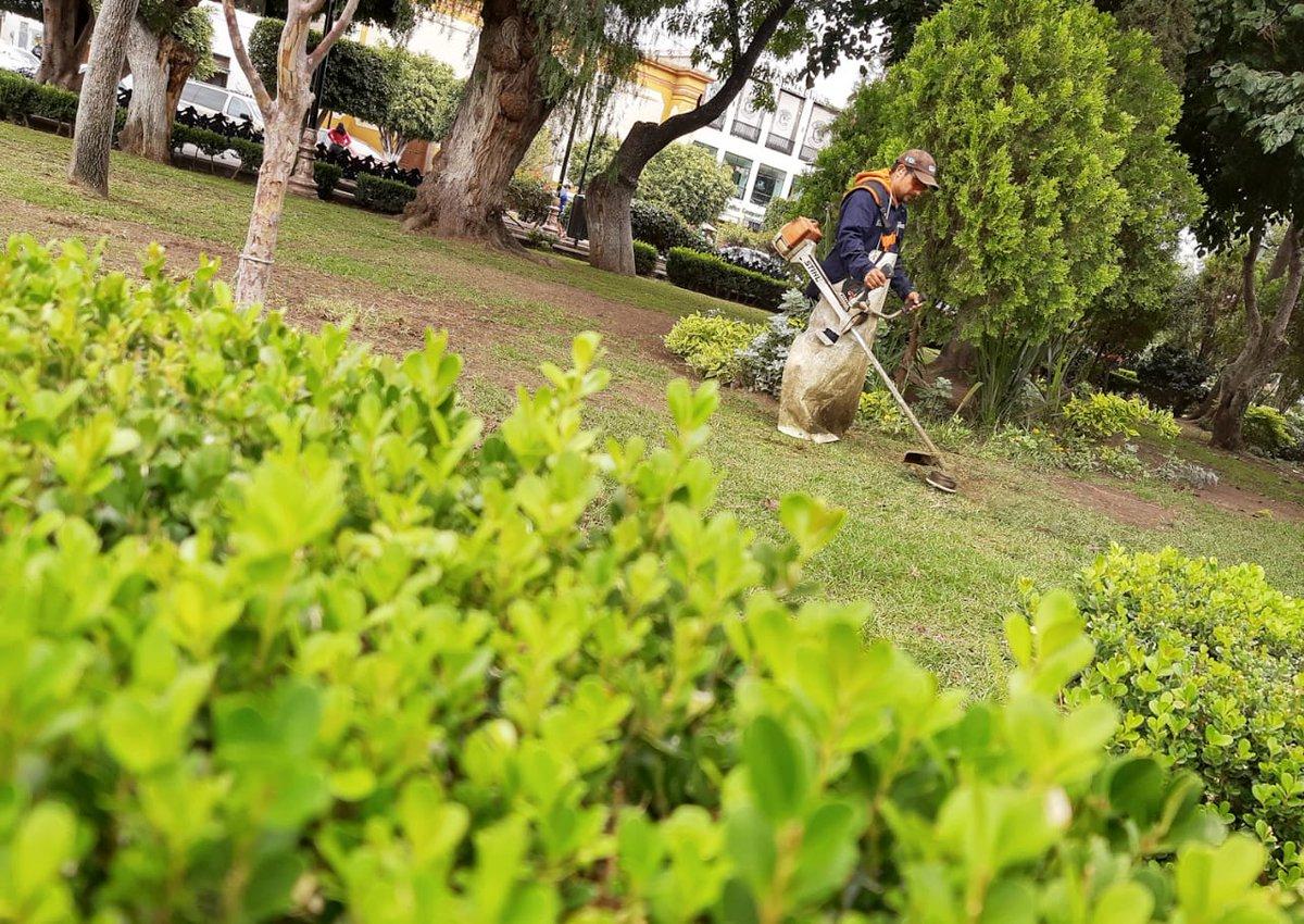 ¡Buen día! 🌳 Parques y Jardines de Gobierno Municipal continúa atendiendo con la limpieza y mantenimiento a las áreas verdes de la ciudad y sus delegaciones.  Por ti, #PorTuFamilia #SiSalesCuídate #SLP 😷✌️ https://t.co/1uaavuXmoy