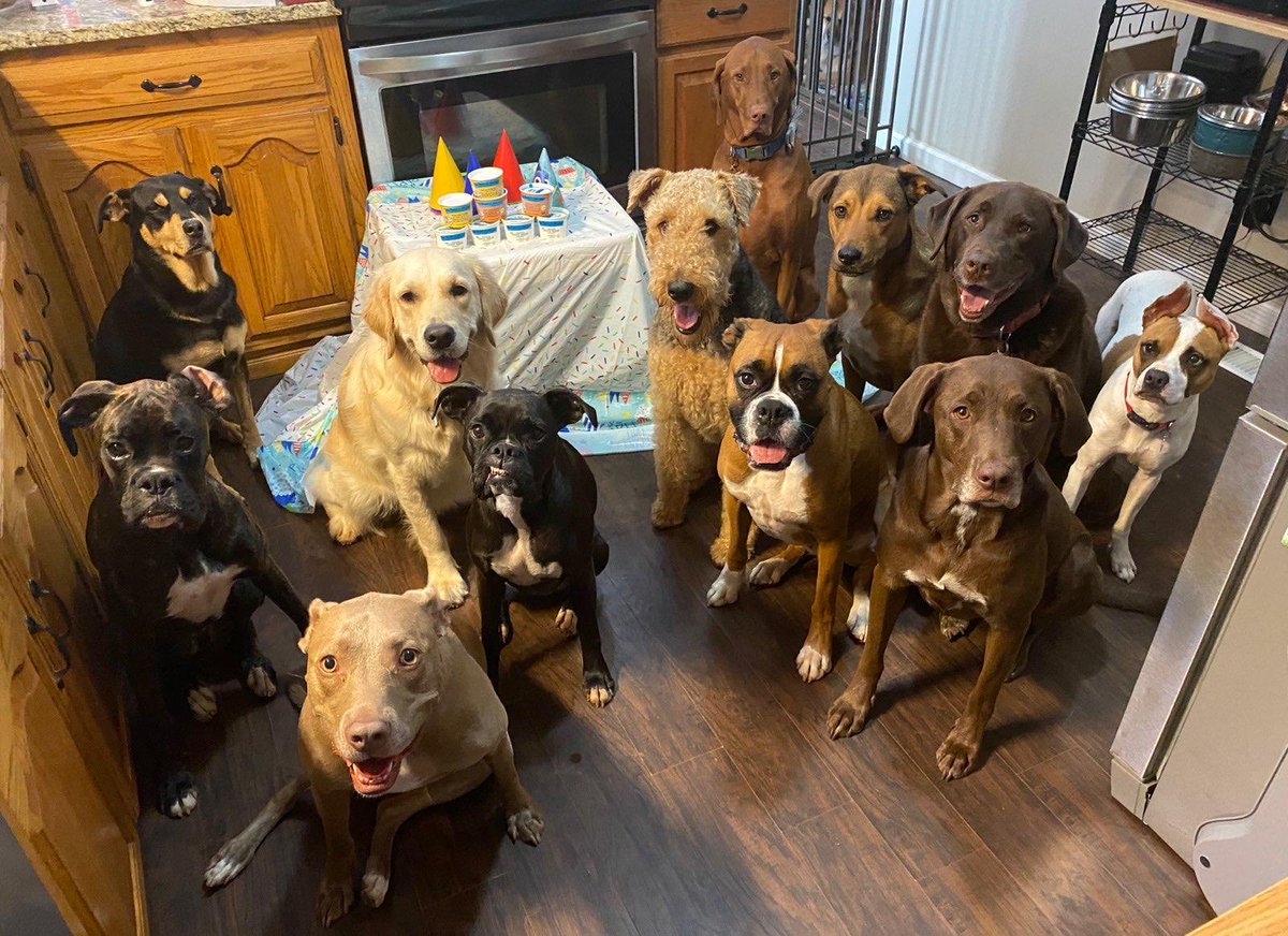 My dog Esther went to a birthday party today 😂