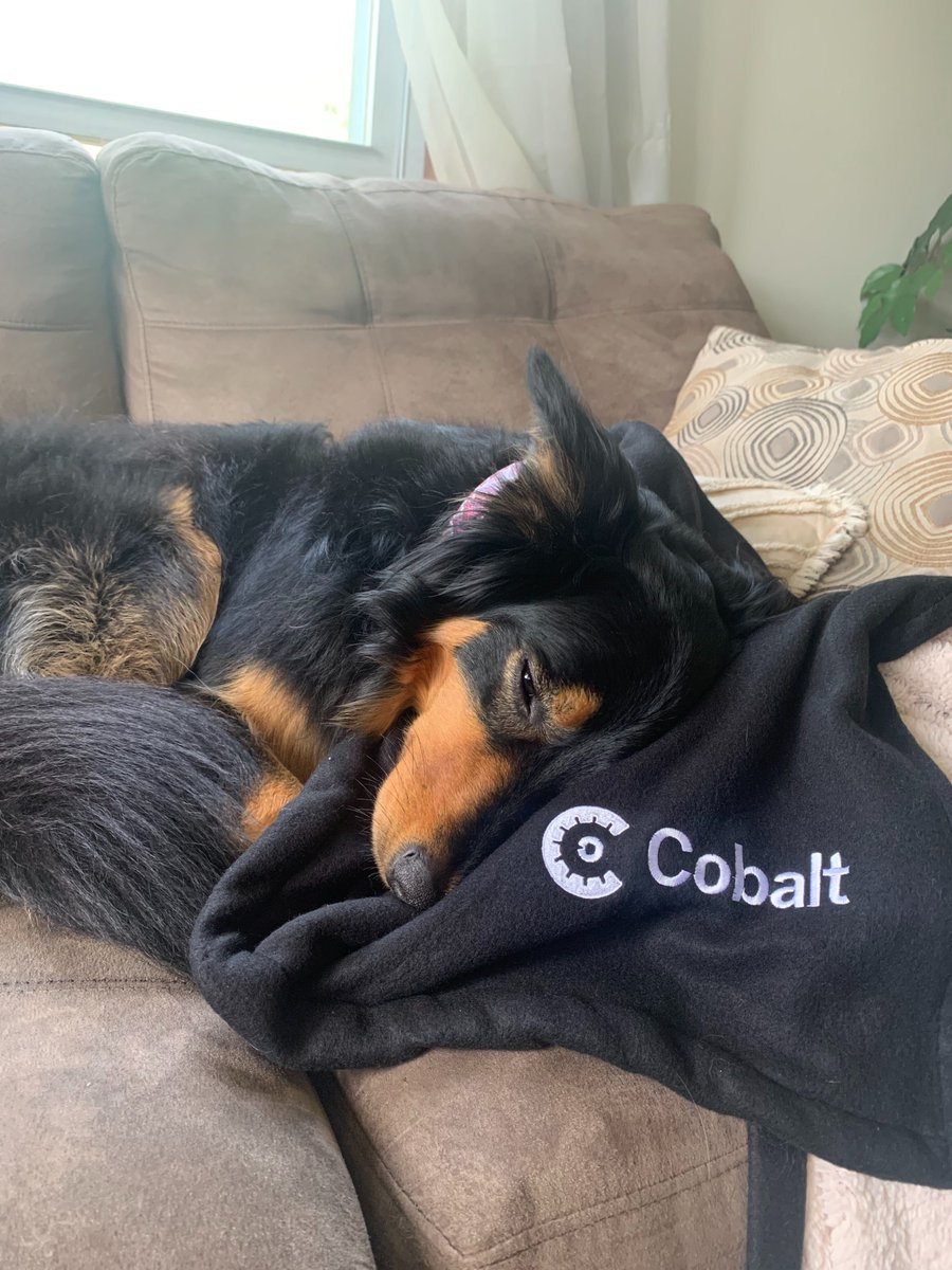 This Cobalt employee has had a long week recruiting and closing new candidates to join our growing team! Want to check out our open roles? Find them here: https://t.co/t1z3ZLGedh https://t.co/6DHjP0teqc