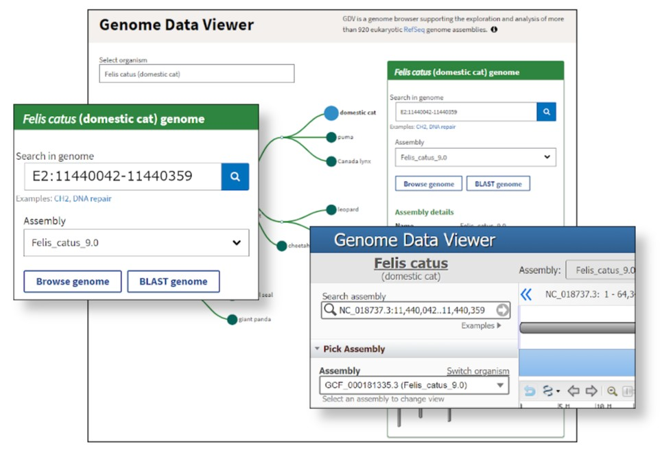 Try the improved chromosome searches in #NCBI Genome Browsers! https://t.co/DNRFLa8ajG https://t.co/hAGCCmsrJE