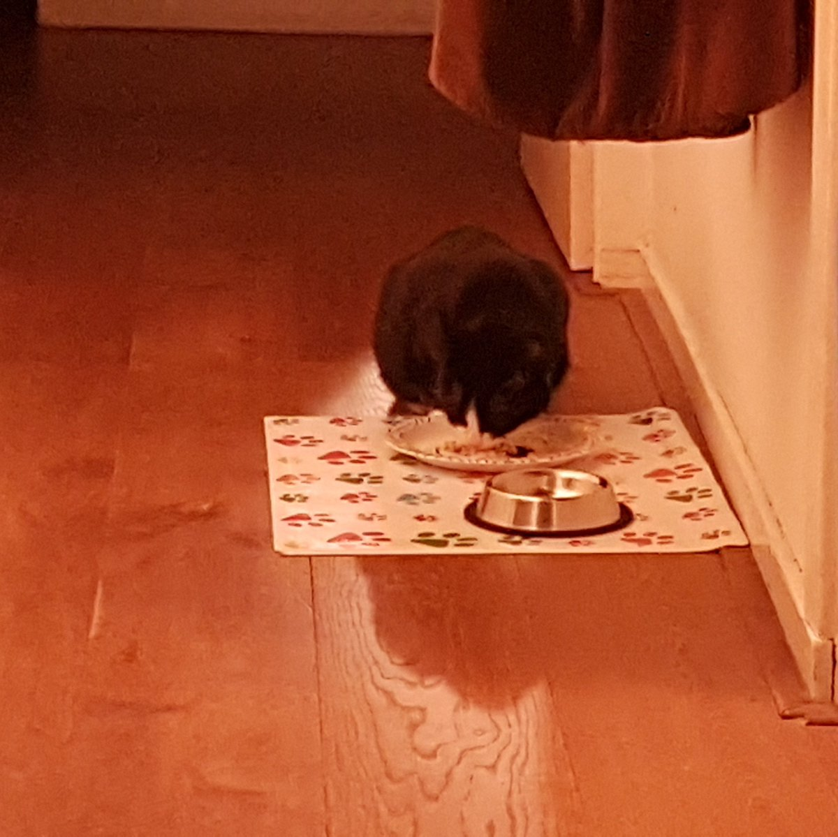 I decided to eat some food. I'm not sure why the humans are so excited about this 🐾 https://t.co/LQIeQKLupQ
