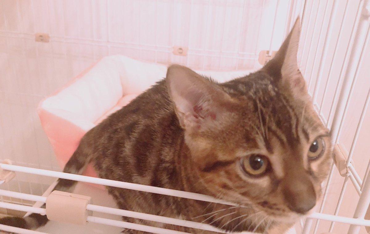 家族が増えました。めちゃくちゃ甘えん坊な猫ちゃんるいくんです🐱💕世界一かわいいよ・・・