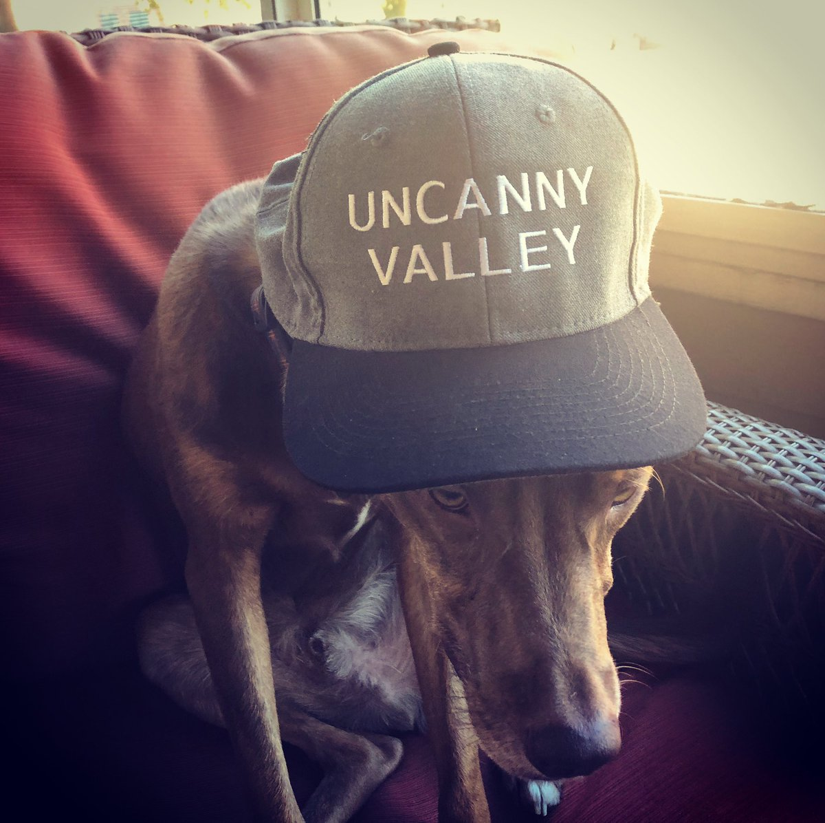 Scooter doesn't like wearing my hat.  @TheOnyxPath #UncannyValley #dogsoftwitter https://t.co/oCUmGuG6Kw