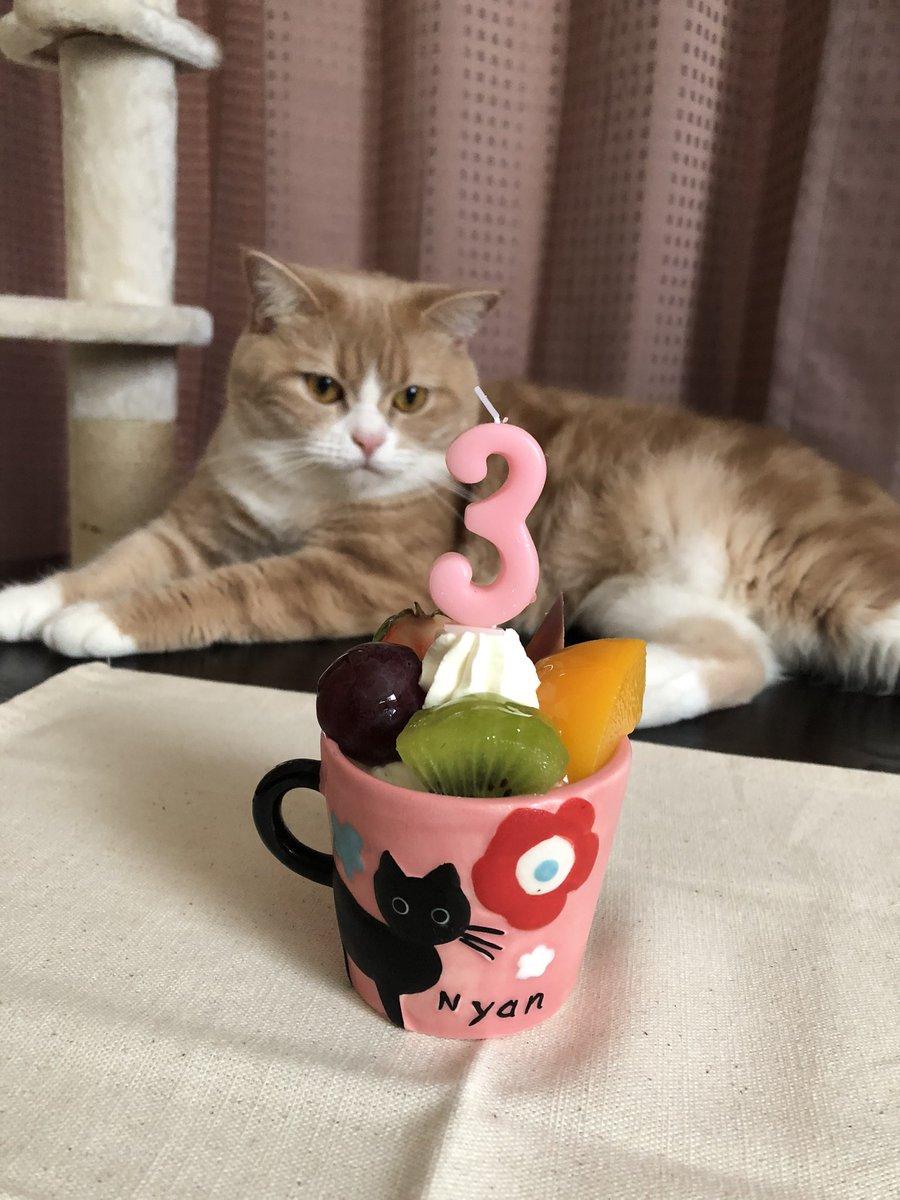 ふくちゃん誕生日おめでとう🎊プレゼントは2種類の爪研ぎ両方気に入ってくれて良かった🎵ダイエット&ストルバイト治療中につき、スペシャルランチはありません😿ふくちゃんの健康が大事だからね!これからも元気に過ごそうね❤️#猫#誕生日