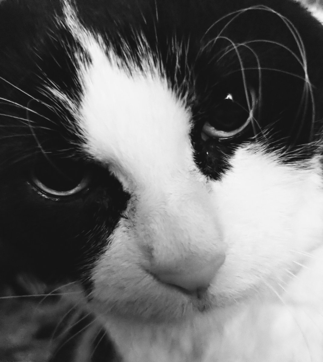 Silly human, my tuxie picture in b&w is exactly like my tuxie picture in color! 😹😺😼 #catsnoirfriday   #CatsOfTwitter #FridayVibes #FridayThoughts #FridayFunday #cats #tuxie #FridayFeeling #CatsOnTwitter #jellybellyfriday https://t.co/X51W3X6CiD