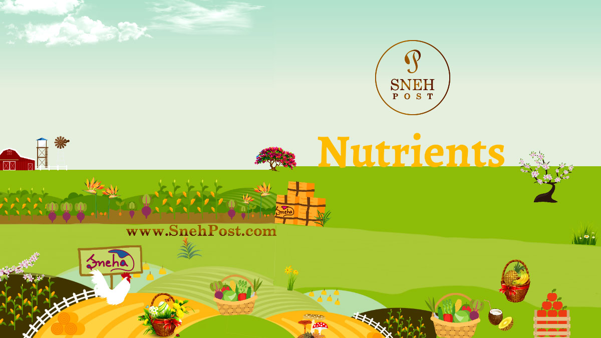 Let's shake hands with a vital & #knowledgeable #nutrition #guide covering all about #nutrients in simple #terminology!  Link: https://t.co/PsnuoTEjGG  #goodfood #healthguide #healthy #nutritional #diet #food #healthyeating #healthyfood #healthyplate #healthydiet #healthytweet https://t.co/GyXjJldHsn