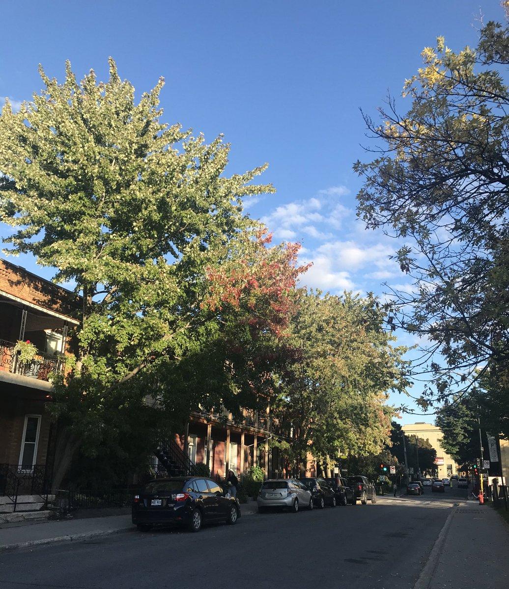 I see you #autumn #trees #yellowleafs 🍂 #goodbyesummer https://t.co/T2LF1AZ0ea