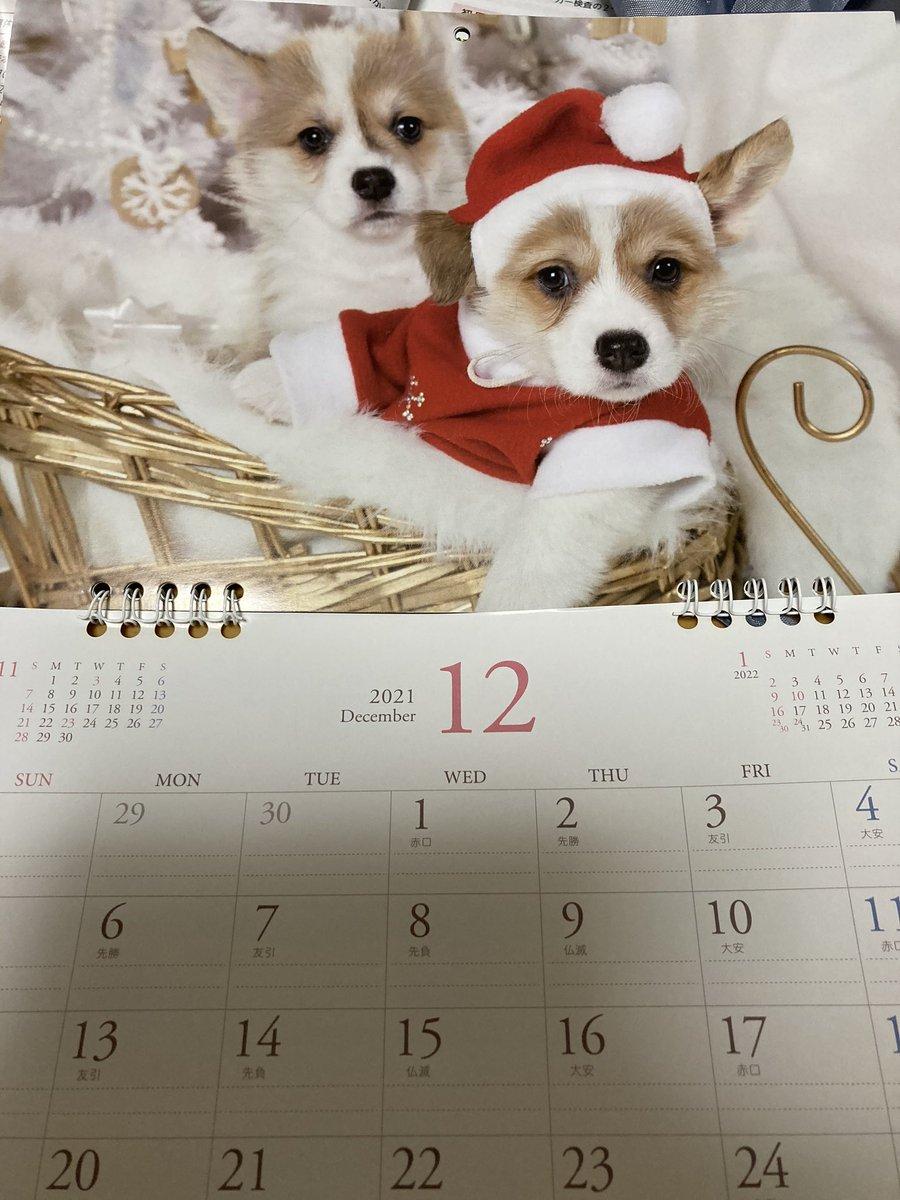 test ツイッターメディア - #セリア の来年のカレンダー、自分の誕生月も心荒む12月も #コーギー と知り買わないという選択肢は無かった。 https://t.co/LCBP5upayz