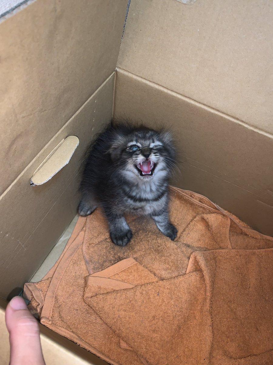 …捨て猫を保護してしまった。何故俺の車の下に…。