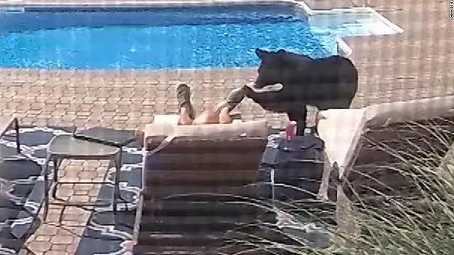 【ツンツン】米国民家にクマ侵入、うたた寝の住民は足先つつかれ起きる男性が目覚めると、クマは逃げ去っていった。クマは男性に近づく前、プールで水を飲むような仕草も見せていた。