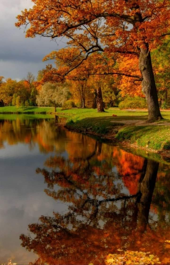 Autumn colors . Time when nature burst with her last beauty . Loveliest smile. ontariosafe #Canada #photography #NaturePhotography #naturelover #beautifulworld #Tourism https://t.co/uQtyHf3qNg