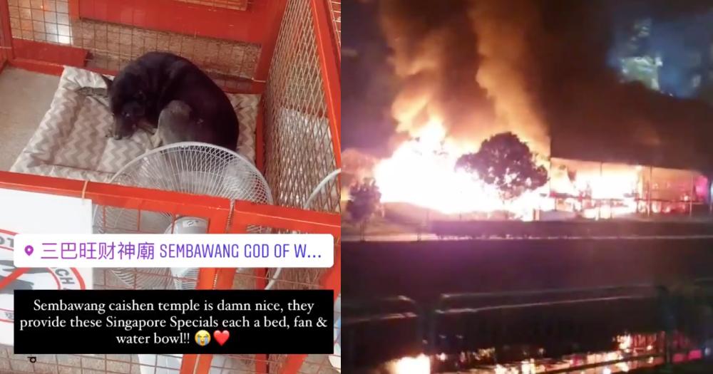 1 dog rescued from Sembawang temple fire, 3 others dead: SCDF https://t.co/4atFxRZEl5 https://t.co/ktD32n4K1A