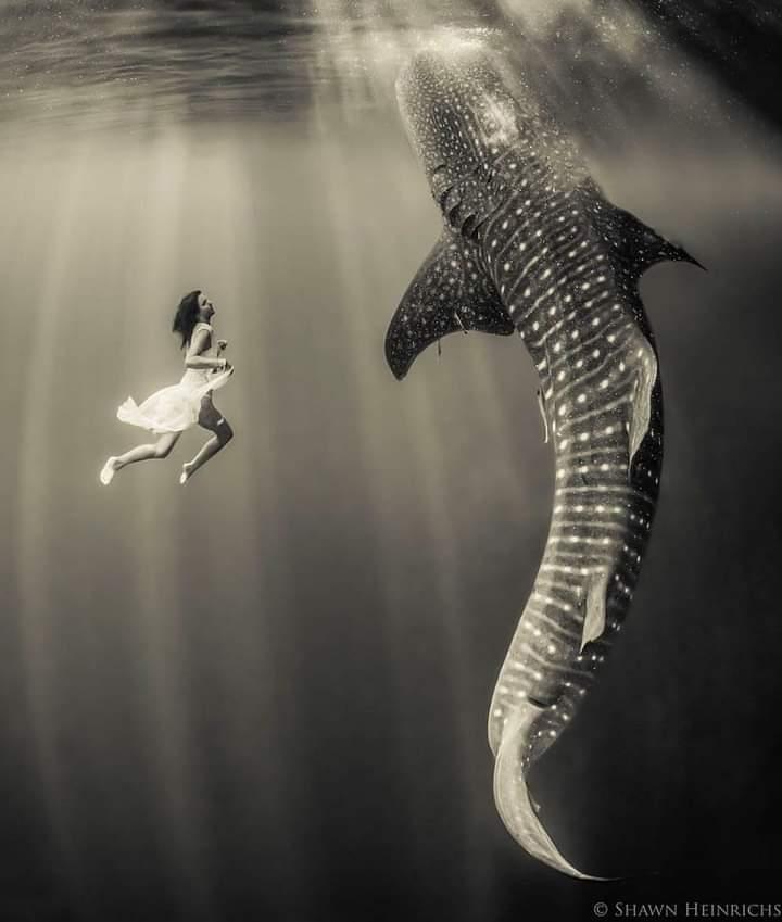 Shall we dance  Freediver @sarah_lewis28  📸 @shawnheinrichs   #whaleshark #swimwithsharks #justdance #deeperbluephoto #freediving #freedivers #saltlife #onebreath #oceans #epic #diving #apnea #explore #underwaterphotography #underwater #freediver #underwaterworld https://t.co/fq8AGUqvEc