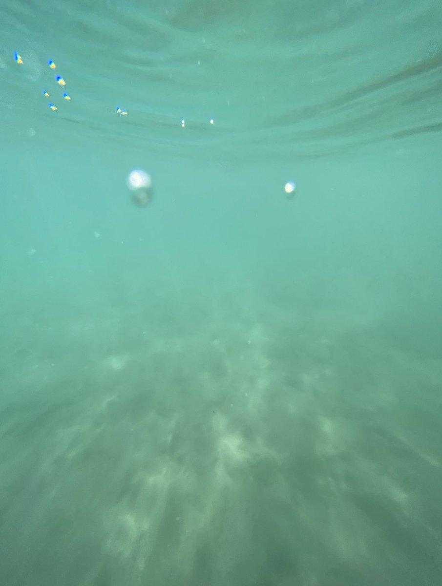 I did it  #ShotOniPhone underwater 🤿 https://t.co/Im93xXYKDY