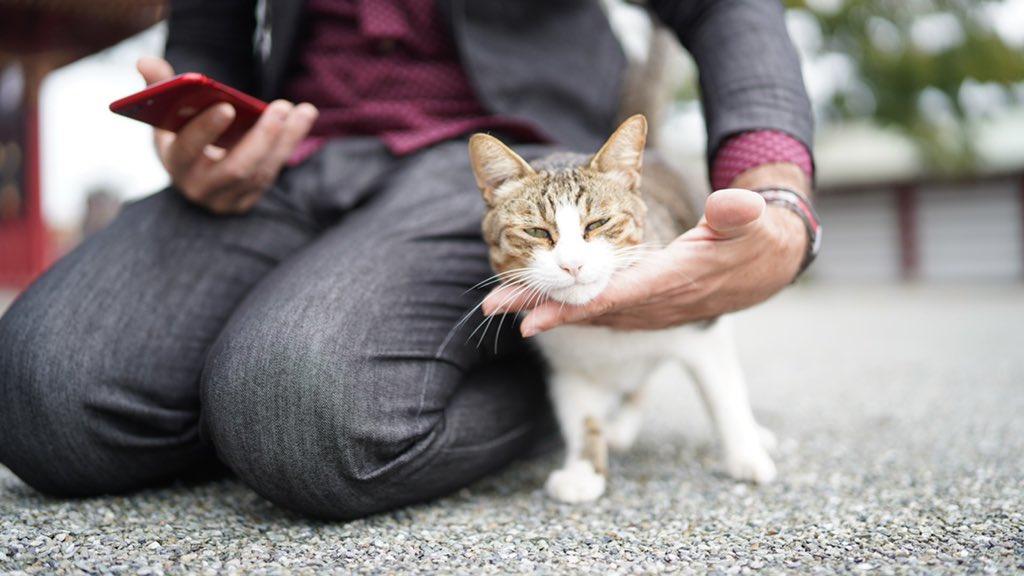 昨日の撮影中の神社猫❗️  左がなんで右のようになったんやろ🙀 https://t.co/qxg8vKLYD1
