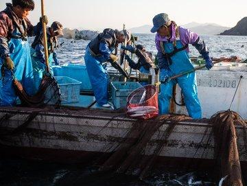 サンマの価格高騰が話題ですね。去年の秋、漁師歴35年の三浦さんに密着して、海の生態系、流通、漁村に起きている変化を探った記事です。日々漁に出て、海を見て、網に入った魚を売り続けてきた三浦さんだからこそ、見えてくる海の環境や流通の変化がありました。