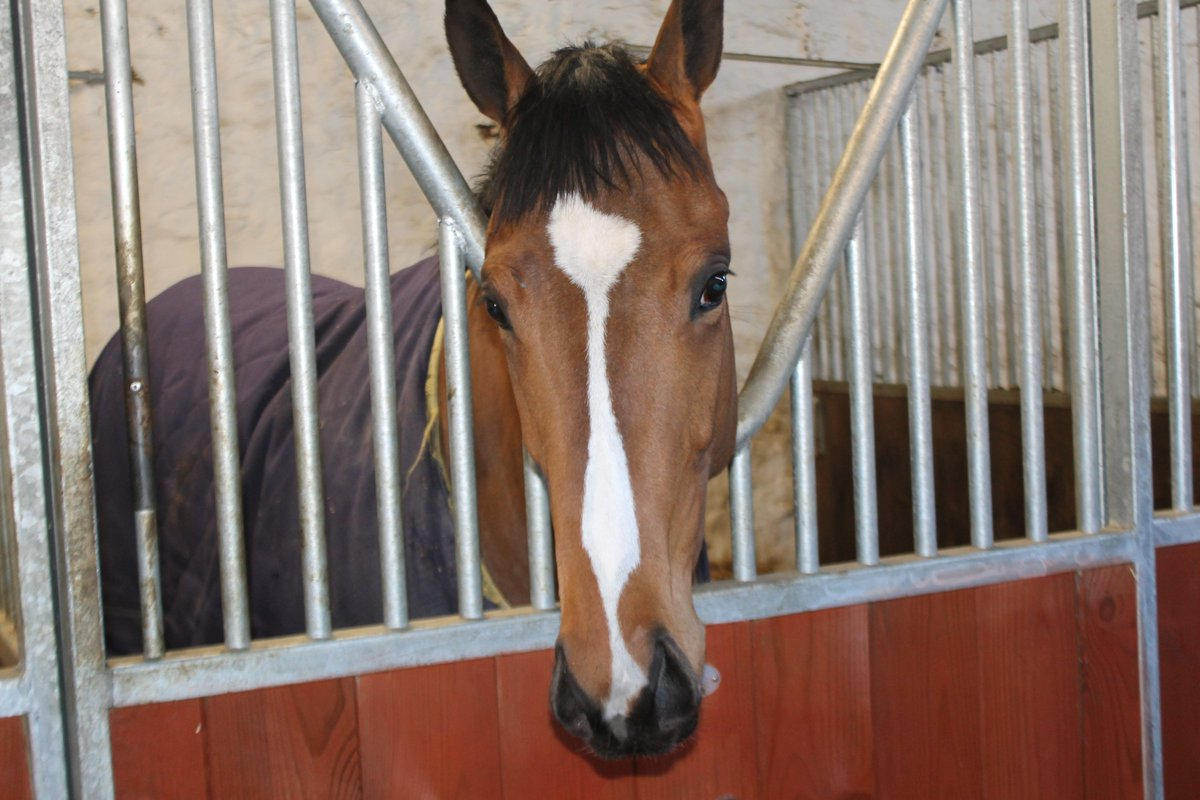 Three runners today, all at @ayrracecourse: Diamond Haze, Get Knotted in the Silver Cup, and Brunch going for a hat-trick. Good luck to connections.