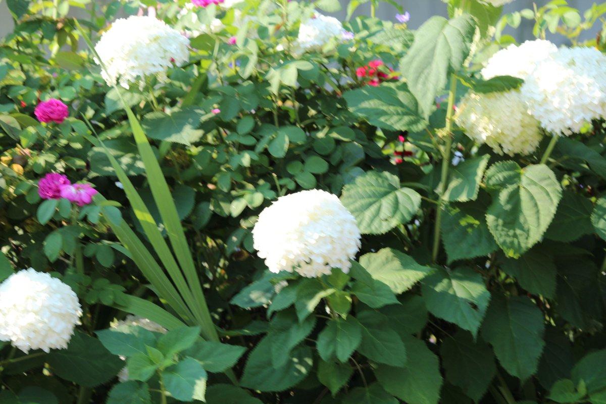 #flowerpower #flowerstagram #photography #summer #photooftheday #nature #naturephotography #plants #plantsofinstagram #sunflowers #naturelovers #natureloversgallery #sunflower #flowerlovers #instablooms #GuruShots #inspiring_shot #viewbugfeature #viewbug #ericashaverphotography https://t.co/PljUrqoPeo