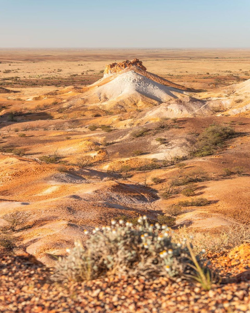 When outback @southaustraliais so picture-perfect it could be mistaken for a painting 😎  IG/ally.and.matt captured this stunning scene of #TheBreakaways and while we can confirm that you're not in an art gallery, these desert-hues would certainly fit right in!  #seeaustralia https://t.co/3i7869TbRi