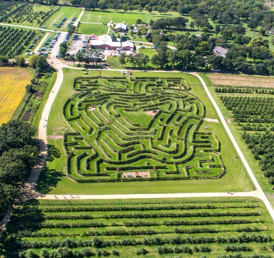 With our Amaze N Apples package, you can splash part of the day away in the waterpark and then venture to Royal Oak Farm to enjoy an apple tree maze. Experience the only orchard in the country with an apple tree maze.  https://t.co/Fz1OFosmPZ https://t.co/VtwsFly3yz