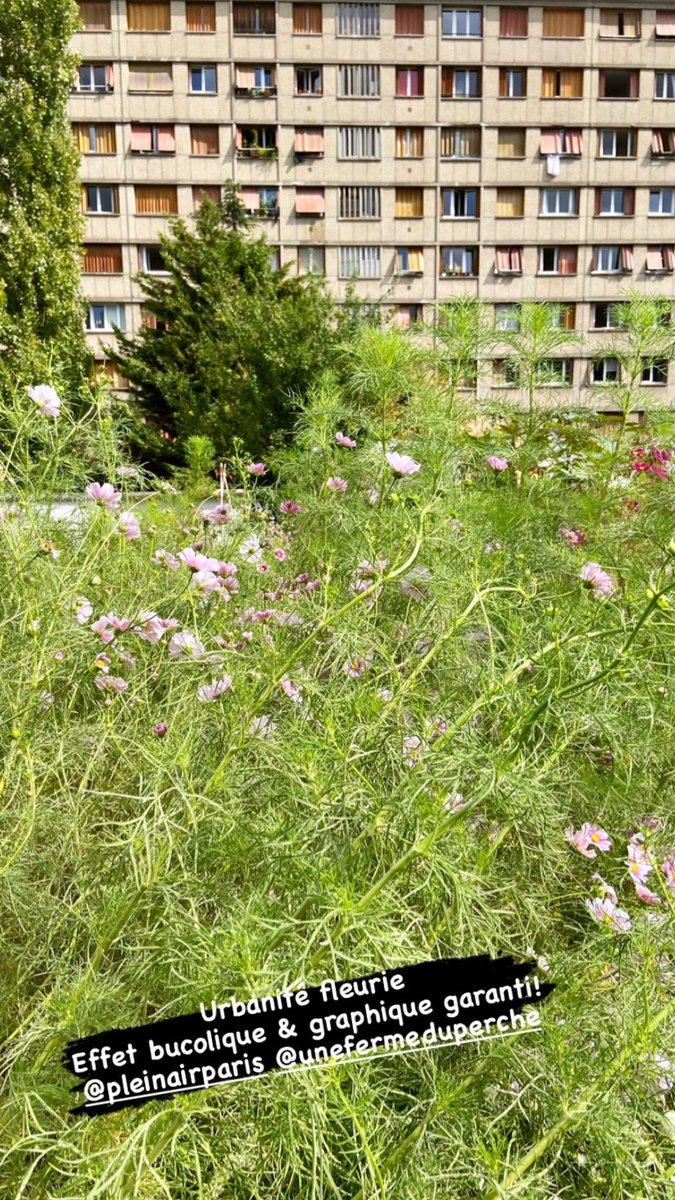 #FlowerPower chez #PleinAirParis avec #UneFermeduPerche 1peu de douceur, de poésie a #paris en ces temps perturbés cela fait du bien! #bio #organic #permaculture #fleur #lifestyle #savethebee #green #nature #developpementdurable 😉 @jfrial c était très sympa & j ai rencontré Tom https://t.co/pn1KSRtrNS