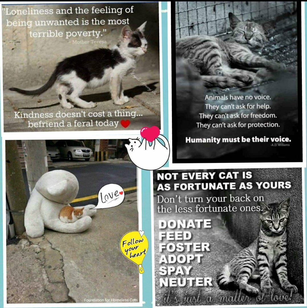#SaveThemAll #BeKind #Caturday https://t.co/tIkOe2GSS7