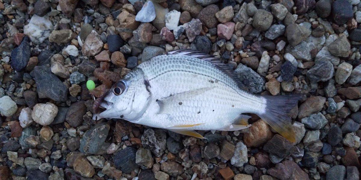 釣りポイント 奥浜名湖 クロダイ
