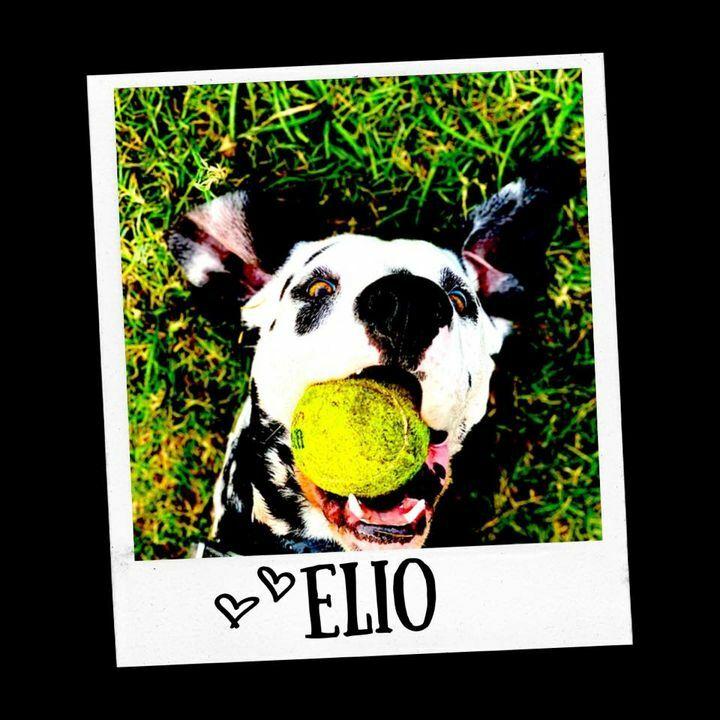 Happy #SelfieSaturday! 🤳🐶 Elio wants you to enjoy some fresh air this weekend! 🎾🐾☀️ #Dalmatian #FreshAir https://t.co/Vjxqw8hBc6
