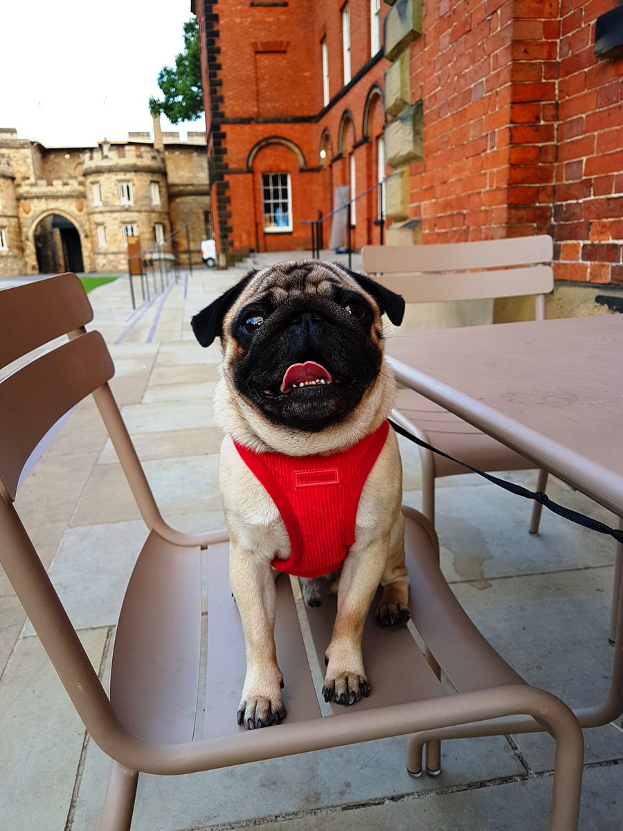 The dog days are back!  Join us for our next dog friendly days 🐕 at Lincoln Castle. Explore with paws and support your local heritage site.  Pre- book your castle day tickets  https://t.co/6HvAyrziMr  Dog Friendly Days: 26th / 27th September 3rd / 4th October 7th / 8th November https://t.co/YFeeikXydy