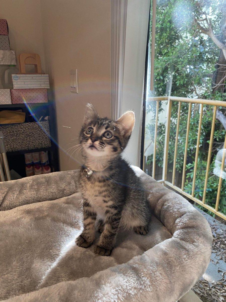 #Officially #2lbs!   #Cats #Cat #Kittens #Kitten #Kitty #Pets #Pet #Meow #Moe #CuteCats #CuteCat #CuteKittens #CuteKitten #MeowMoe    https://t.co/2V30YI7KuB https://t.co/6JpYhSg3GS