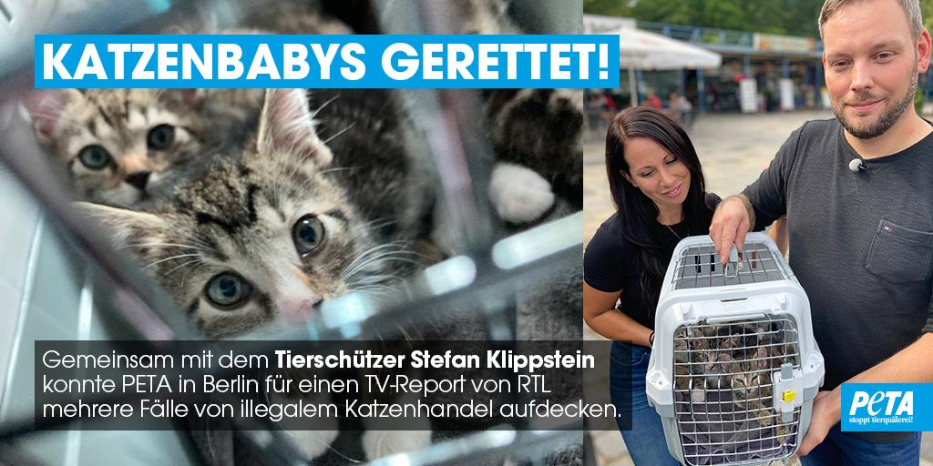 Die Katzenbabys waren so jung, dass sie noch auf die Milch ihrer Mutter angewiesen waren. Alle Tiere waren an Darmbakterien erkrankt, teils stark dehydriert und von Würmern befallen. Sobald sie gesund sind, dürfen alle Kätzchen in ein dauerhaftes Zuhause ziehen. ♥ #AdoptDontShop https://t.co/WU6MZxBoKj