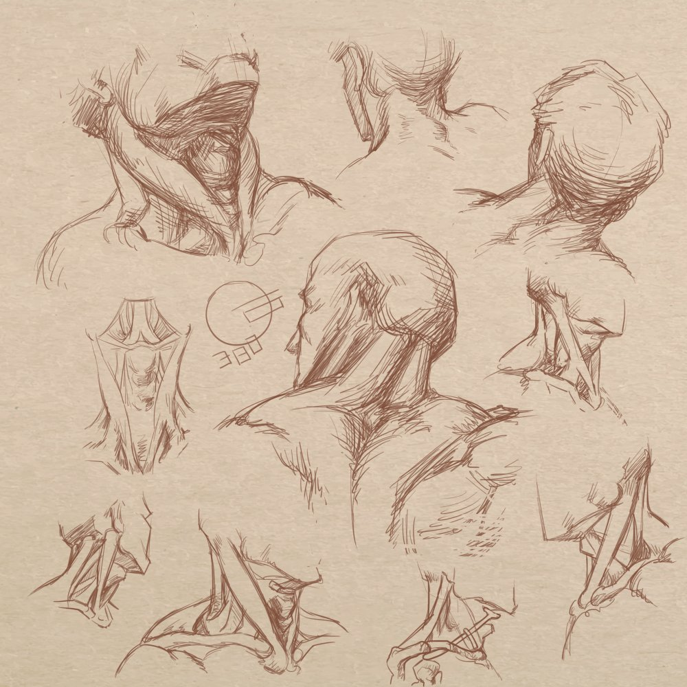 More this week from 'Bridgman's Drawing from Life' 371-390 . . . . #warmup #anatomy #study #humananatomy #head #face #bridgman #drawing #sketch #art #gottogetbetter #practice #skull #features #neck https://t.co/707AdliCBv