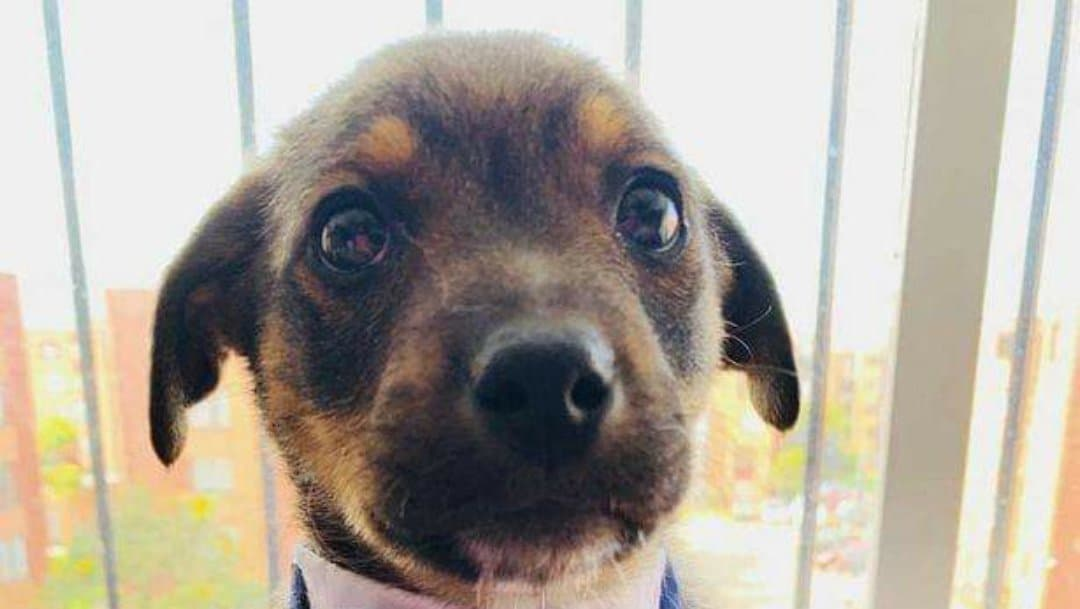 Puppy gets dressed up in adorable tuxedo to meet new owners - but they never arrive  https://t.co/D09T13rRNP https://t.co/DQvf8R8T5z
