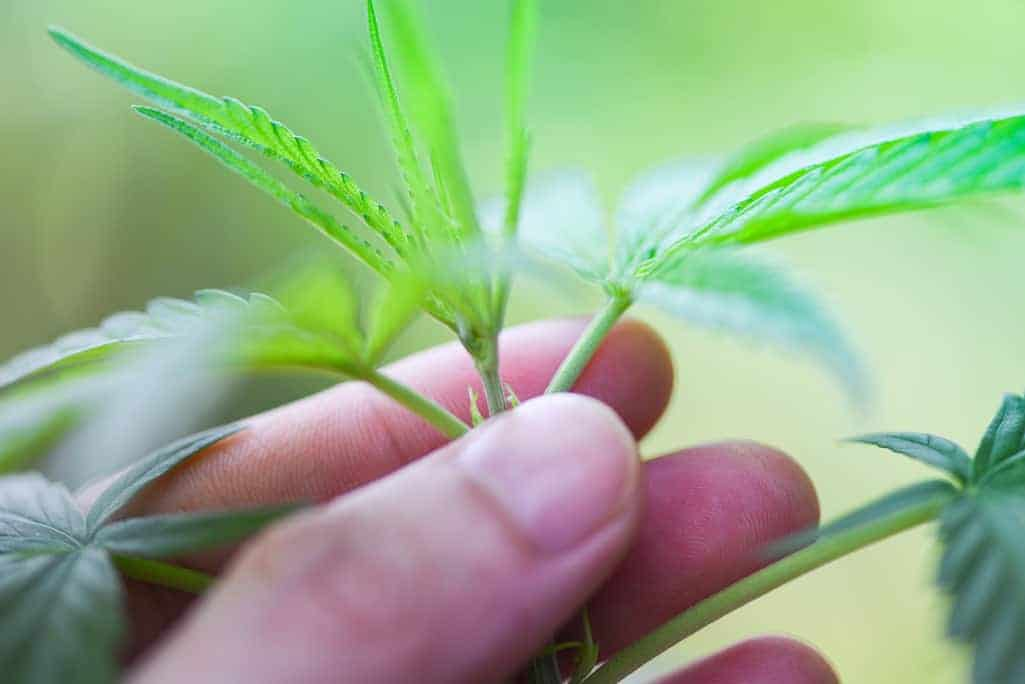 #cannabis #marijuana #weed C'nagar police crack whip on cannabis growers Mysuru: Chamarajanagar district police intensified its crackdown on illegal cannabis cultivation in several villages of Hanur, Kollegal and Yelandur taluks coming https://t.co/yElip6gCS7 #cannabiscommunity https://t.co/T6CTYwlWJ5