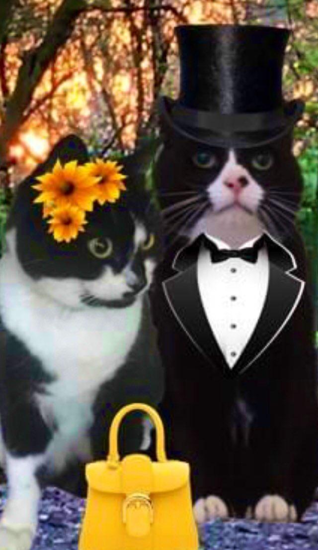 @duchess_meow @cat_samson @OssieAndLuna @AngusMcPussPuss @FreddieHoudini @AngelaStillwell *Smoochiesssss* 😽💕💋😽💕💋😽💕💋 https://t.co/wJTkqx37nu