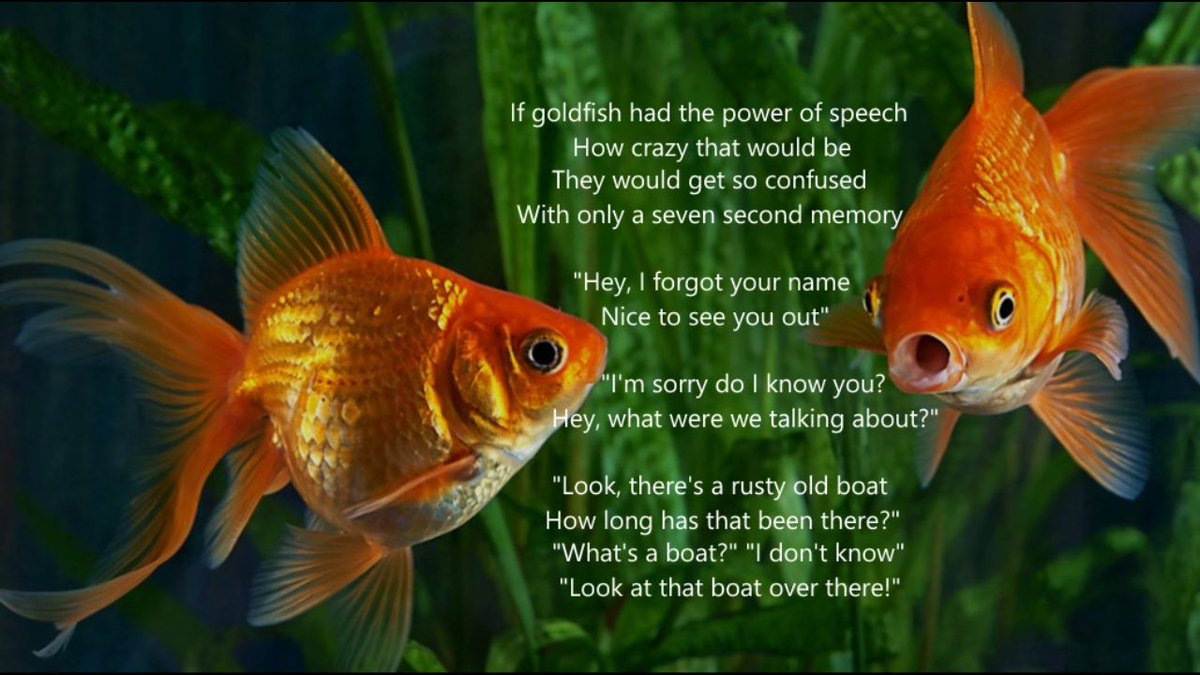 Talking Goldfish  #poetry #shortpoems #micropoetry #poetsoftwitter #poetscommunity #talking #goldfish #randomthoughts #fishy #humour #iwrotethis #writing #writersoftwitter #writingcommunity #creative #creativewriting #creativecommunity #soomanyhashtags https://t.co/13JCkN7Av1